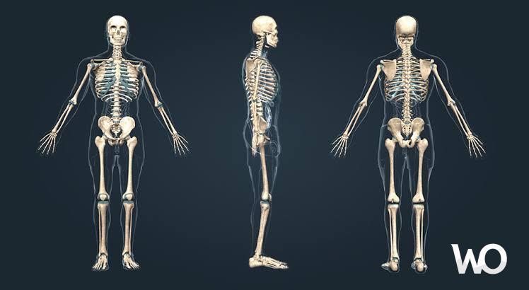 New England University Araştırmacıları İlk Dijital İnsan İskeletini Oluşturdu.