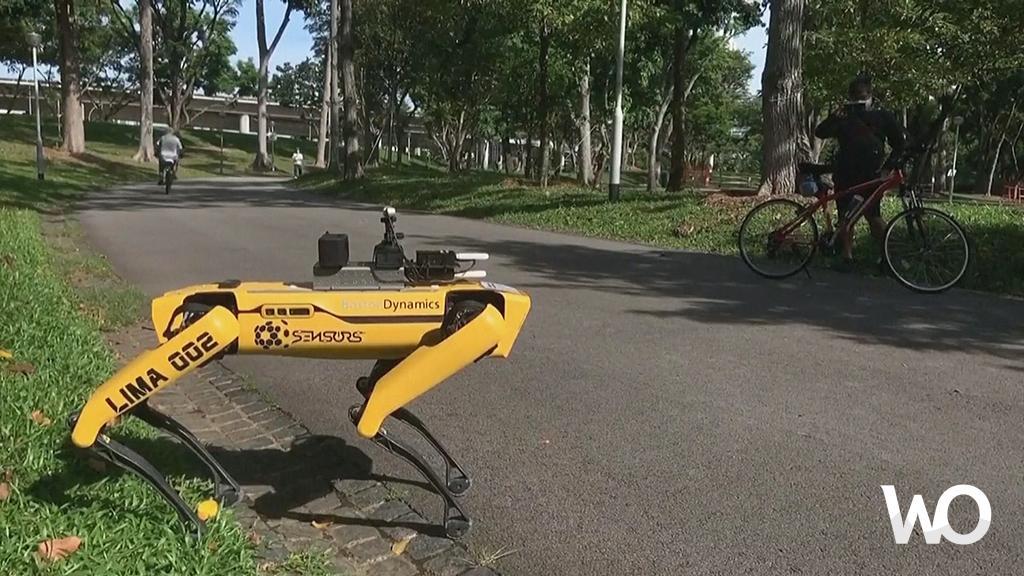 Singapur Sosyal Mesafeyi Desteklemek İçin Robot 'Köpek' Kullanıyor